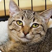 Adopt A Pet :: Alicia - Irvine, CA