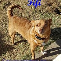 Adopt A Pet :: Fifi - Tucson, AZ