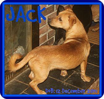 Dachshund/Pug Mix Dog for adoption in White River Junction, Vermont - JACK