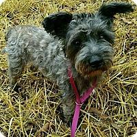 Adopt A Pet :: GM - Courtesy Post - Ella - Clifton, TX