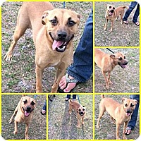Adopt A Pet :: GABBY - Davenport, FL