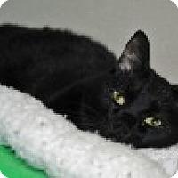 Adopt A Pet :: Alaska - Marietta, GA