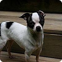 Adopt A Pet :: Carlos - Arden, NC
