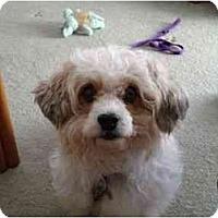 Adopt A Pet :: Jenna - La Costa, CA