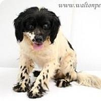 Adopt A Pet :: O'Higgins - Madison, WI