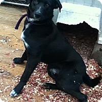 Adopt A Pet :: Rudy - Hazard, KY