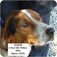 Adopt A Pet :: I.D. # 740-08 - RESCUED! - Zanesville, OH