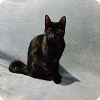 Adopt A Pet :: Abigail - Alexandria, VA