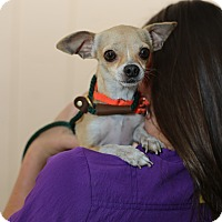 Adopt A Pet :: Buttercup - Mission Viejo, CA