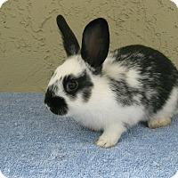 Adopt A Pet :: Janese - Bonita, CA