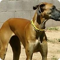Adopt A Pet :: Tinkerbell - Phoenix, AZ
