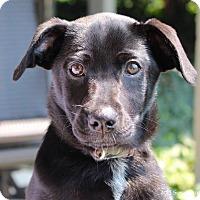 Adopt A Pet :: Kohl - Bedford, VA