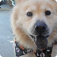 Adopt A Pet :: Leo - Sacramento, CA