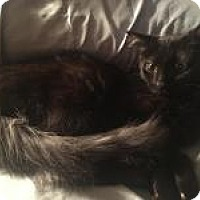 Adopt A Pet :: Sophia - Stahlstown, PA