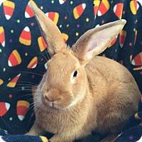 Adopt A Pet :: Ralph - Columbus, OH