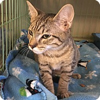 Adopt A Pet :: Mimi - Island Park, NY