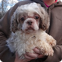 Adopt A Pet :: MURPHY - Wheeling, WV