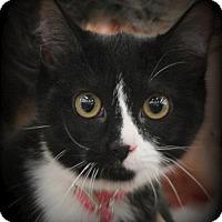 Adopt A Pet :: Pip - Hudson, WI
