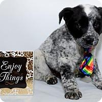 Adopt A Pet :: 424 - Aurora, CO