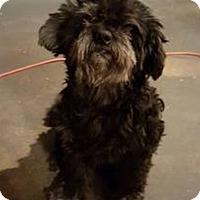 Adopt A Pet :: Marley - Warwick, NY