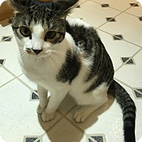 Adopt A Pet :: Skye - Colmar, PA