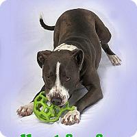 Adopt A Pet :: Honeybun - Berkeley, CA