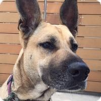 Adopt A Pet :: Luna - Ocean Ridge, FL
