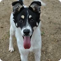 Adopt A Pet :: Annie 3 in CT - Manchester, CT