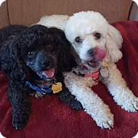 Adopt A Pet :: Sammy and Lilly - Alpharetta, GA