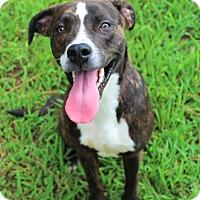 Adopt A Pet :: Rhydon - Murphysboro, IL