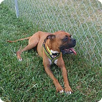 Adopt A Pet :: Bill Miller - Austin, TX