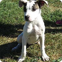 Terrier (Unknown Type, Medium) Mix Puppy for adoption in Unionville, Pennsylvania - Annabelle