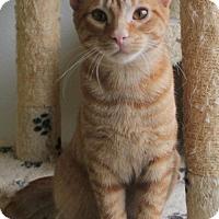 Adopt A Pet :: Titus - Mocksville, NC