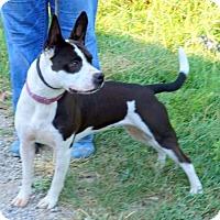 Adopt A Pet :: Charlotte 9-24-16 - Dickson, TN