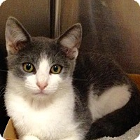 Adopt A Pet :: Randi - East Brunswick, NJ