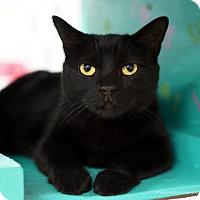 Adopt A Pet :: Merci - Tucson, AZ