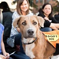 Adopt A Pet :: Esmerelda Avocet - Brooklyn, NY