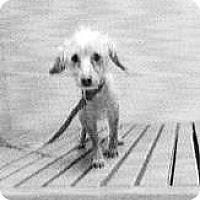 Adopt A Pet :: Layla - Spokane, WA