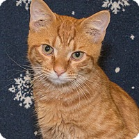 Adopt A Pet :: Carmine - Elmwood Park, NJ