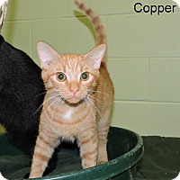 Adopt A Pet :: Copper - Slidell, LA