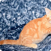 Adopt A Pet :: Rusty - Salt Lake City, UT