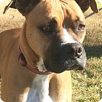 Adopt A Pet :: Rico* - Aurora, IL