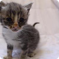 Adopt A Pet :: Neil - Dearborn, MI