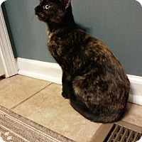 Adopt A Pet :: Lexie - St. Louis, MO