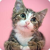 Adopt A Pet :: Sherman - New York, NY