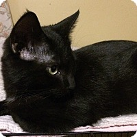Adopt A Pet :: Bruce - Brattleboro, VT