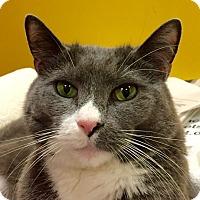 Adopt A Pet :: Doodle - Norwalk, CT