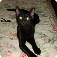 Adopt A Pet :: Elvira - Houston, TX