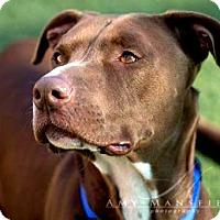 Adopt A Pet :: Zeus - Vista, CA