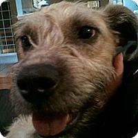 Adopt A Pet :: Lennon - Alamosa, CO